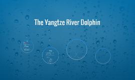 Bottom feeders in the yangtze rivers