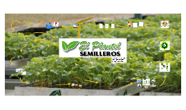 El Plantel Semillero (Marketing Estratégico)