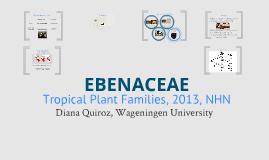 Copy of Tropical Plant Families - Ebenaceae
