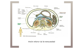Transcavidades de los epiplones
