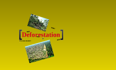 Geography- Deforestation