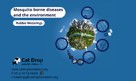 Mosquito borne disease and environment