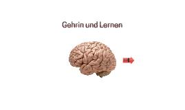 Gehrin und Lernen