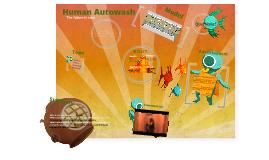 Human Autowash