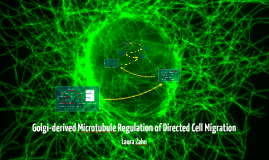 Golgi-derived Microtubule Regulation of Directed Cell Migrat