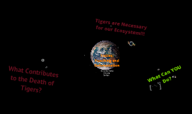 Copy of Global Issues- Tiger Poaching