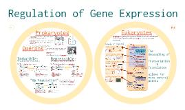 AP Bio: Regulation of Gene Expression Chapter 11