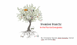 Copy of Invasive Insects