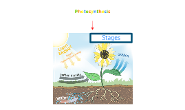 Photosynthesis Mind Map