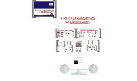 Copy of MYCOBACTERIUM Y BACILOS GRAMPOSITIVOS