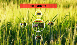 The TrImates