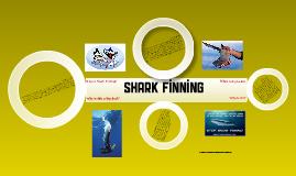 shark finnin'