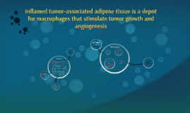 Inflamed tumor-associated adipose tissue is a depot for macr