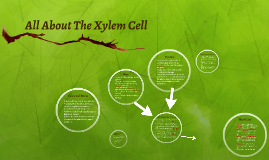 All About The Xylem Cell