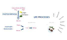 Copy of Life Processes