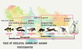 Tree of Skeletal Homology among Vertebrates