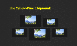 The Yellow-Pine Chipmunk