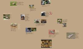 Презентация по теме: Животные Австралии
