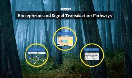 Epinephrine and Signal Transduction Pathways