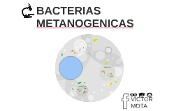 Copy of BACTERIAS METANOGENICAS