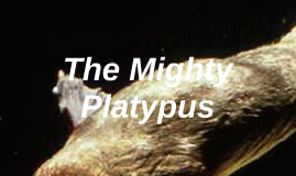 The Mighty Platypus
