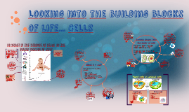 Looking into the building blocks of organisms... Cells