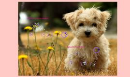 Dermatología de pequeños animales