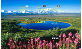 Tundra - Science