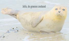 Jelle de zeehond
