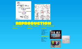 Reproduction Lab