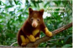 Tree Kangaroo PSA