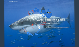 Cancer Research in Sharks