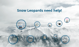 Copy of Snow Leopards are Endangered