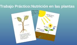 Trabajo Práctico:Nutrición en las plantas