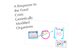 A Response to the Food Crisis: Genetically Modified Organisms