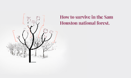 How to survive in the Sam houston national forest.