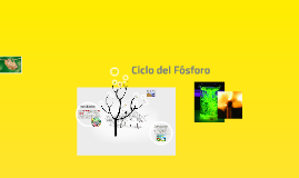 Copy of Ciclo del Fósforo