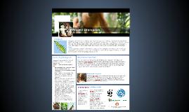 Project Orangutan