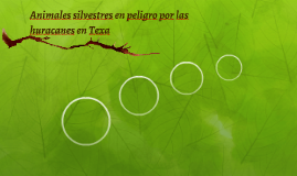 Animales silvestres en peligro por las huracanes en Texa