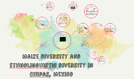 Maize diversity and ethnolinguistic diversity in Chipas, Mex