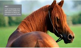 Copy of Horse Presentation