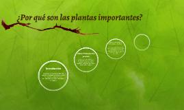 ¿Por qué son las plantas importantes?