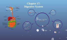 Ch. 17: Digestive System Sections 17.4 and 17.5