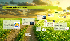 """Copy of CICLOS BIOGEOQUÍMICOS: """"El boro"""""""