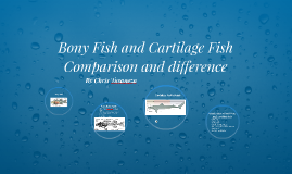 Bony and Cartilage Fishes comparisons and Differences