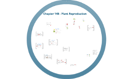 Chapter 14B - Plant Reproduction