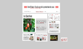 Cote D'Ivoire: l'esclavage de la production de cacao