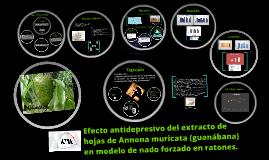 Copy of Efecto antidepresivo del extracto de hojas de Annona muricat