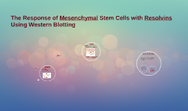 Can Mesenchymal Stem Cells respond to resolvins using Wester