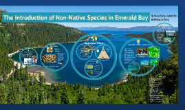 Copy of Preserving the Clarity of Emerald Bay